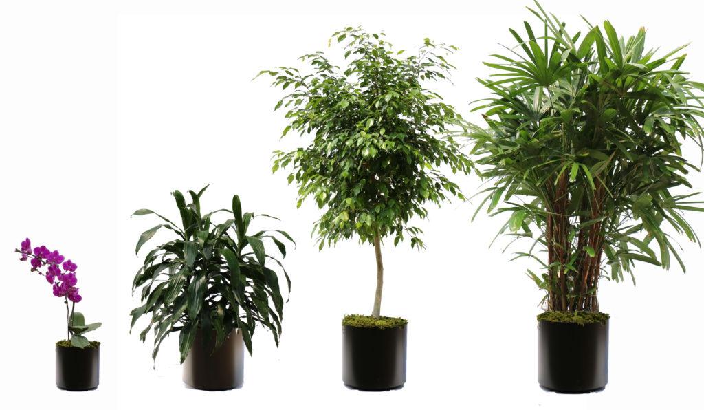 10 Secrets for Professional Looking Indoor Plants